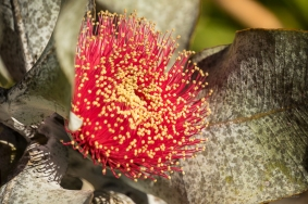 JuliePowell_Aust Gardens-18