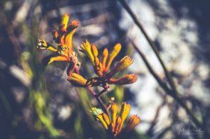 JuliePowell_Aust Gardens-20