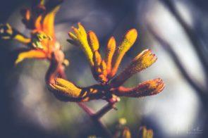 JuliePowell_Aust Gardens-21