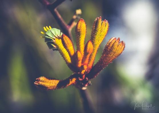 JuliePowell_Aust Gardens-22