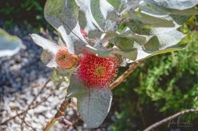 JuliePowell_Aust Gardens-25