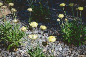 JuliePowell_Aust Gardens-28