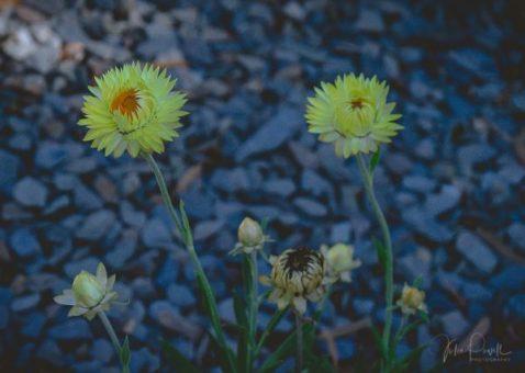JuliePowell_Aust Gardens-29