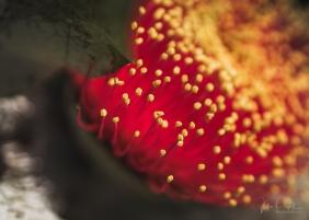 JuliePowell_Aust Gardens-3