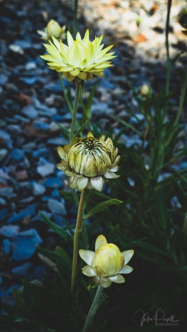 JuliePowell_Aust Gardens-32