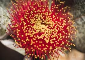 JuliePowell_Aust Gardens-5