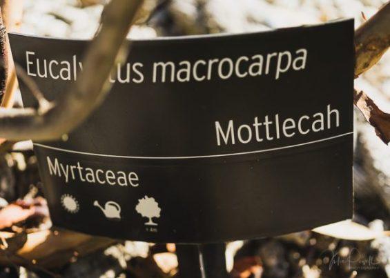 JuliePowell_Aust Gardens-8