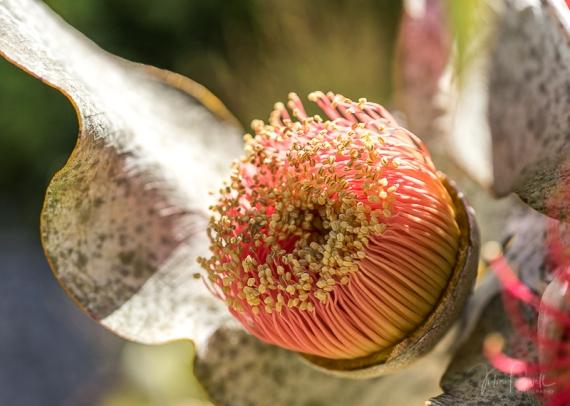 JuliePowell_Aust Gardens