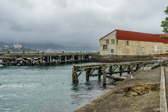 JuliePowell_Cape Halswell-6