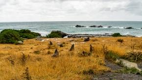 JuliePowell_Cape Palliser-14