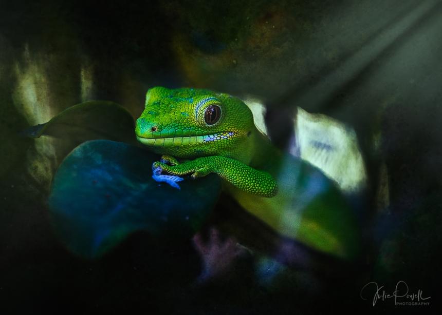 JuliePowell_Gecko