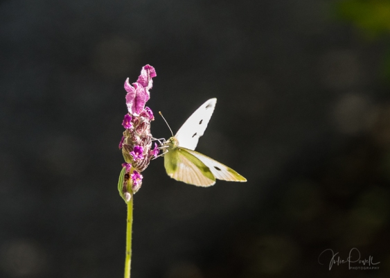JuliePowell_Hamilton Gardens-43