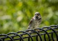 JuliePowell_Hamilton Gardens-87