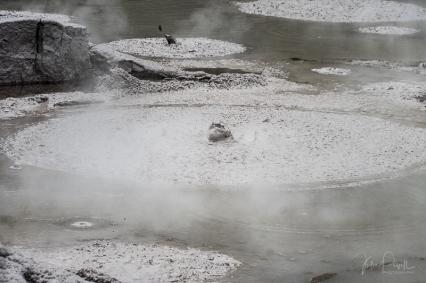 JuliePowell_Mud Pools-11