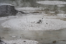 JuliePowell_Mud Pools-8