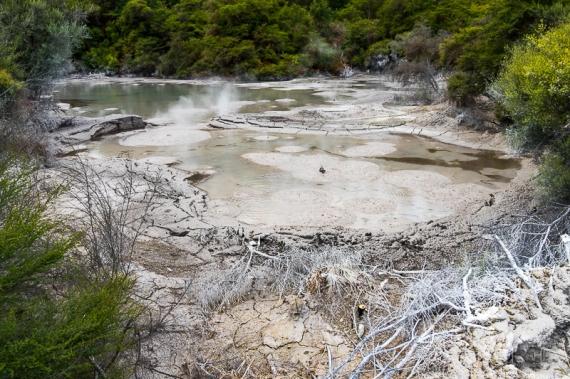 JuliePowell_Mud Pools