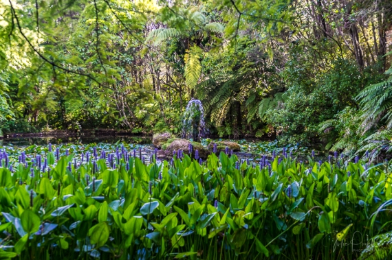 JuliePowell_Rapaura Watergardens-12