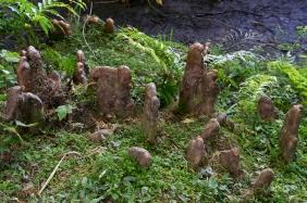 JuliePowell_Rapaura Watergardens-13