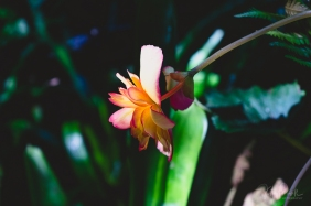 JuliePowell_Rapaura Watergardens-14