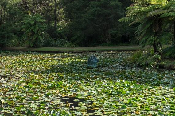 JuliePowell_Rapaura Watergardens-20