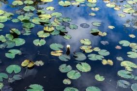 JuliePowell_Rapaura Watergardens-22