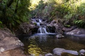 JuliePowell_Rapaura Watergardens-25