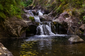 JuliePowell_Rapaura Watergardens-26