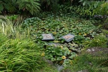 JuliePowell_Rapaura Watergardens-4