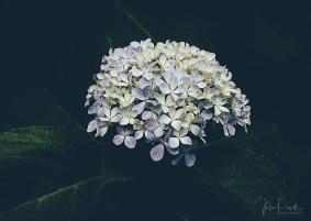 JuliePowell_Rapaura Watergardens-5