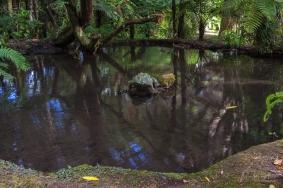 JuliePowell_Rapaura Watergardens-7