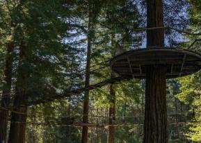 JuliePowell_Rotorua Redwoods-2