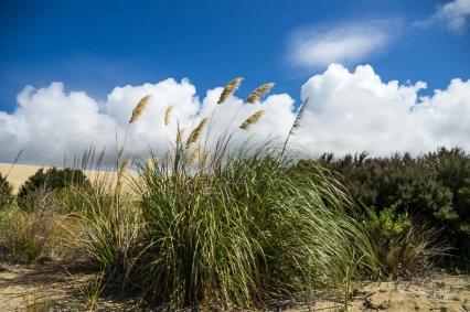 Te Paki Giant Dunes