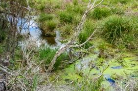 JuliePowell_Wetlands-2