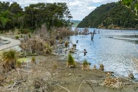 JuliePowell_Wetlands-3