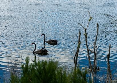 JuliePowell_Wetlands-4