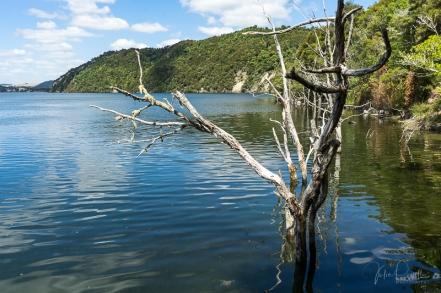JuliePowell_Wetlands-6