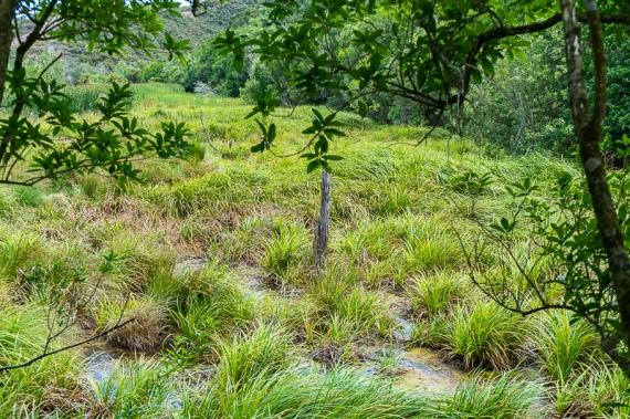 JuliePowell_Wetlands