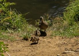 JuliePowell_Whangerei Falls-10