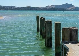 JuliePowell_Whitianga Wharf-8