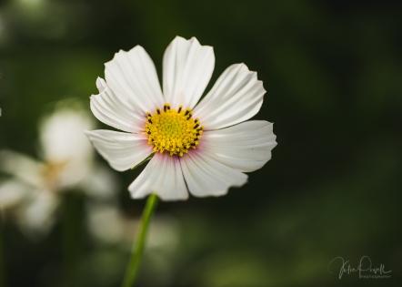JuliePowell_Winter Garden-13
