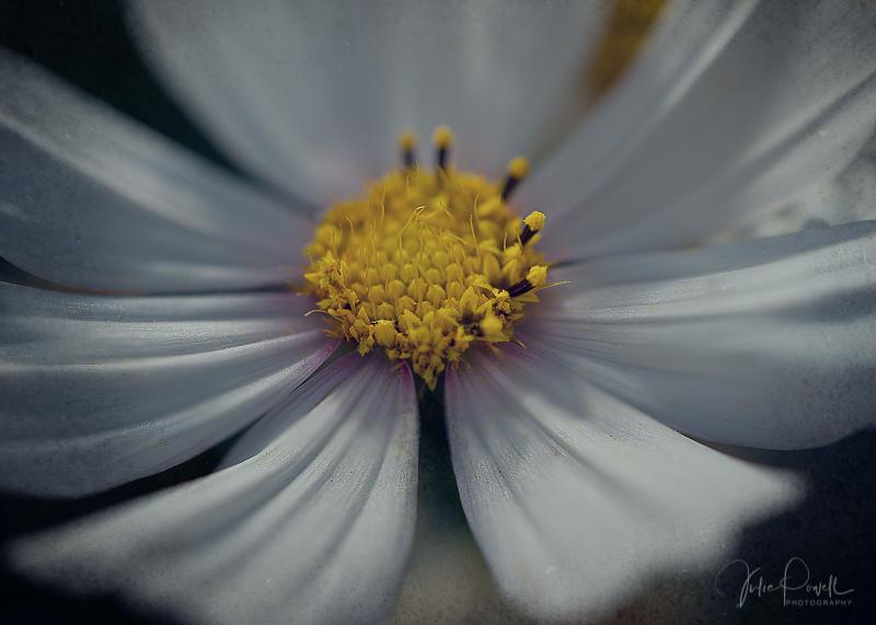 JuliePowell_Winter Garden-14