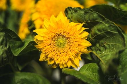 JuliePowell_Winter Garden-17