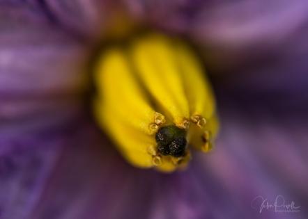 JuliePowell_Winter Garden-21