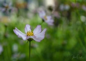 JuliePowell_Winter Garden-29