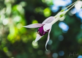 JuliePowell_Winter Garden-30