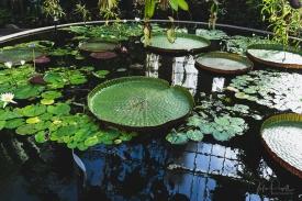 JuliePowell_Winter Garden-36