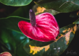 JuliePowell_Winter Garden-37