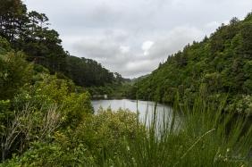 JuliePowell_Zealandia-2