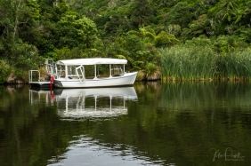 JuliePowell_Zealandia-9