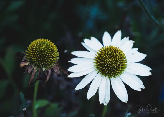 Julie Powell_Autumn-14